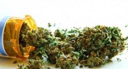 Feds Admit Weed Kills Cancer