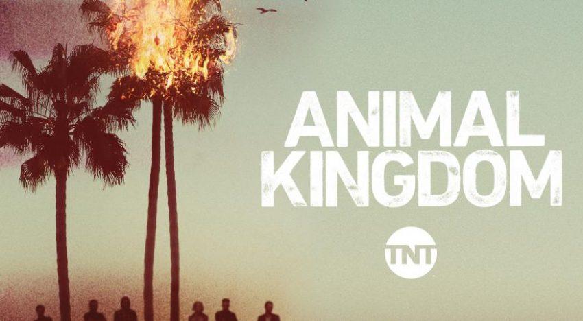 5 Reasons You Must Watch 'Animal Kingdom'